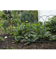 FLORAWORLD Ziergeflecht, HxL: 40 x 2500 cm, grün-Thumbnail