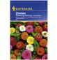 KIEPENKERL Zinnie, Zinnia elegans, Samen, Blüte: mehrfarbig-Thumbnail