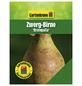 GARTENKRONE Zwerg-Birne, Pyrus communis »Branquila«, Früchte: süß, zum Verzehr geeignet-Thumbnail