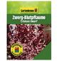 GARTENKRONE Zwerg-Blutpflaume, Prunus cistena »Crimson Dwarf«, Blütenfarbe rosa/pink-Thumbnail