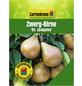 GARTENKRONE Zwergbirne, Pyrus communis »Dr. Joaquina«, Früchte: süß, zum Verzehr geeignet-Thumbnail