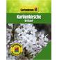 GARTENKRONE Zwergkirsche, Prunus kurilensis »Brilliant«, Blütenfarbe weiß/rosa-Thumbnail