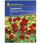 KIEPENKERL Zwergmohn, Papaver commutatum, Samen, Blüte: rot-Thumbnail