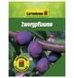 GARTENKRONE Zwergpflaume, Prunus domestica, Früchte: süß, zum Verzehr geeignet-Thumbnail