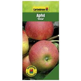 GARTENKRONE Apfel, Malus domestica »Elstar«, Früchte: süß, zum Verzehr geeignet