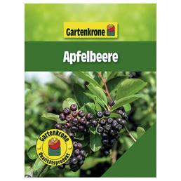 GARTENKRONE Apfelbeere Aronia melanocarpa