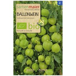 SAMEN MAIER Ballonwein