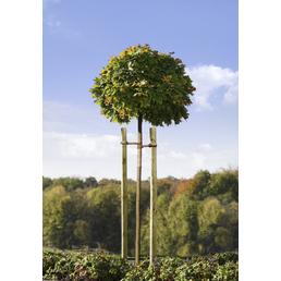MR. GARDENER Baumpfahl, Grün, kesseldruckimprägniert, 200 cm