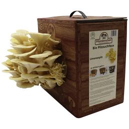 Bio Pilzzuchtbox Limonenpilz, Nutzung im Haus