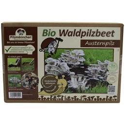 Bio Waldpilzbeet Austernpilz, für den Garten