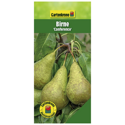 GARTENKRONE Birne, Pyrus communis »Conference«, Früchte: süß, zum Verzehr geeignet