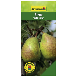 GARTENKRONE Birne, Pyrus communis »Gute Luise«, Früchte: süß, zum Verzehr geeignet