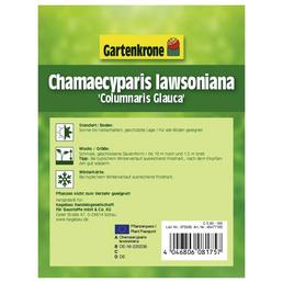 GARTENKRONE Blaue Scheinzypresse Chamaecyparis lawsoniana »Columnaris Glauca«