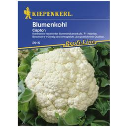 KIEPENKERL Blumenkohl oleracea var. botrytis Brassica