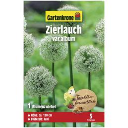GARTENKRONE Blumenzwiebel »Gartenkrone Allium hirtifolium var.album«