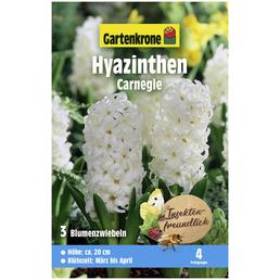 GARTENKRONE Blumenzwiebel »Gartenkrone Hyazinthe Carnegie«