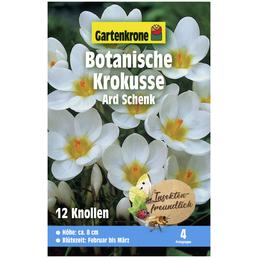 GARTENKRONE Blumenzwiebel »Gartenkrone Krokusse bot. Ard Schenk«