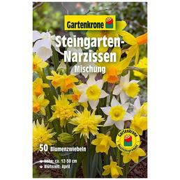 GARTENKRONE Blumenzwiebel »Gartenkrone Narzisse Steingarten«