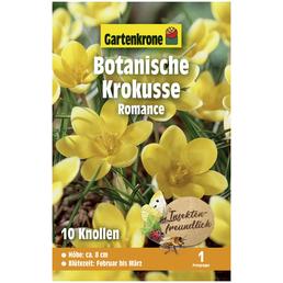 GARTENKRONE Blumenzwiebel »Gartenkrone Wildkrokusse Romance«
