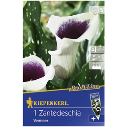 KIEPENKERL Blumenzwiebel Kalla, Canna Hybrida, Blütenfarbe: mehrfarbig