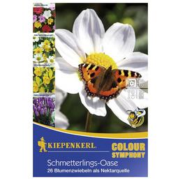 KIEPENKERL Blumenzwiebel Mischung, Mischung Mischung, Blütenfarbe: mehrfarbig
