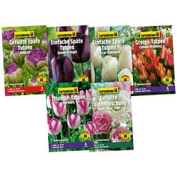 GARTENKRONE Blumenzwiebelmix Set Tulpen Highlights
