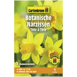 GARTENKRONE Blumenzwiebeln Botanische Narzisse, Narcissus Cyclamineus »Tête à Tête«, Blütenfarbe: gelb