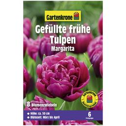 GARTENKRONE Blumenzwiebeln Gefüllte frühe Tulpe, Tulipa X hybrida »Margarita«, Blütenfarbe: rot