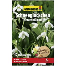 GARTENKRONE Blumenzwiebeln Schneeglöckchen, Galanthus Woronowii, Blütenfarbe: zweifarbig