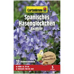 GARTENKRONE Blumenzwiebeln Spanisches Hasenglöckchen, Hyacinthus Hispanica »Excelsior«, Blütenfarbe: blau