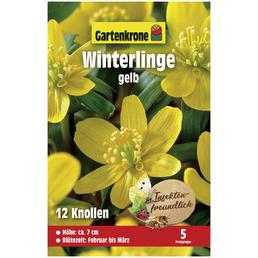 GARTENKRONE Blumenzwiebeln Winterling, Eranthis Hyemalis, Blütenfarbe: gelb