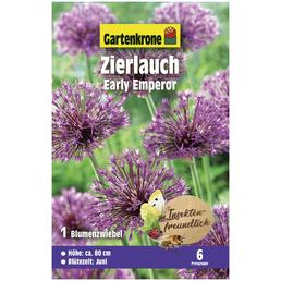 GARTENKRONE Blumenzwiebeln Zierlauch, Allium Jesdianum »Early Emperor«, Blütenfarbe: rosa