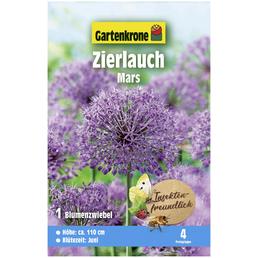 GARTENKRONE Blumenzwiebeln Zierlauch, Allium X hybrida »Mars«, Blütenfarbe: violett