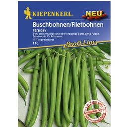 KIEPENKERL Buschbohne vulgaris var. nanus Phaseolus »Faraday«