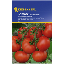 KIEPENKERL Buschtomate lycopersicum Solanum »Hofmanns Rentita«
