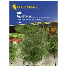 KIEPENKERL Dill Anethum graveolens var. hortorum »Delikat«