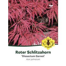 Dunkelroter Schlitzahorn, Acer palmatum »Dissectum Garnet«, Blattfarbe rot/schwarz