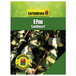 GARTENKRONE Efeu, Hedera helix »Goldheart«, winterhart