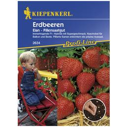 KIEPENKERL Erdbeere ananassa Elan »Fragaria«