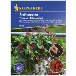 KIEPENKERL Erdbeere ananassa Fragaria »Toscana«