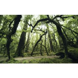 KOMAR Foto-Vliestapete »Ancient Green«, Breite 450 cm, seidenmatt