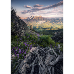 KOMAR Foto-Vliestapete »Flowering Tales«, Breite 200 cm, seidenmatt