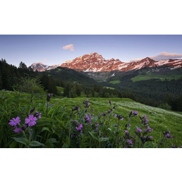 KOMAR Foto-Vliestapete »Switzerland«, Breite 450 cm, seidenmatt