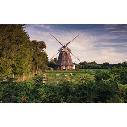 KOMAR Foto-Vliestapete »Tage wie Diese«, Breite 450 cm, seidenmatt