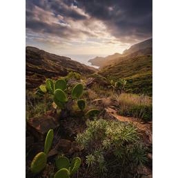 KOMAR Foto-Vliestapete »Warmes Licht«, Breite 200 cm, seidenmatt