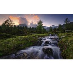 KOMAR Foto-Vliestapete »Wild Paradise«, Breite 450 cm, seidenmatt