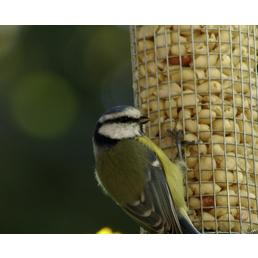 DOBAR Futterspender, Vögel