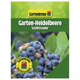 GARTENKRONE Garten-Heidelbeere Vaccinium corymbosum »Goldtraube«