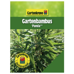 GARTENKRONE Gartenbambus Fargesia murielae »Panda«, Aktuelle Pflanzenhöhe: 40  - 60 cm