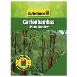 GARTENKRONE Gartenbambus scabrida Fargesia »Asian Wonder«